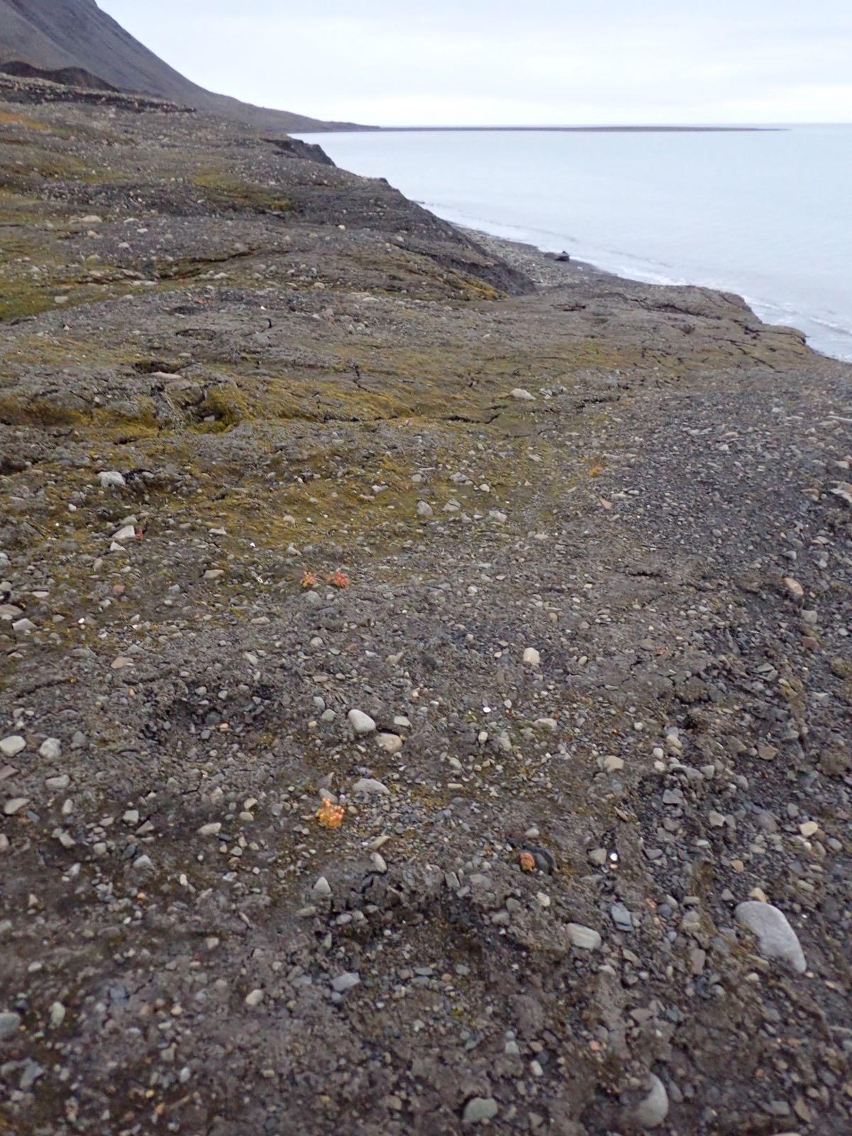 Polar bear footprints in the tundra (photo by Martine van den Heuvel-Greve)