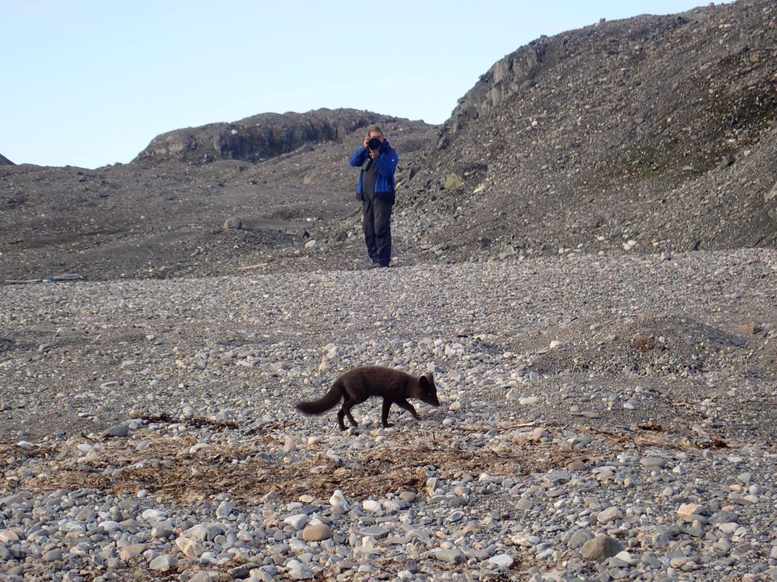 A curious Arctic fox (photo by Martine van den Heuvel-Greve)