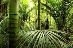 web-72-dpi-shutterstock_13506157_tropisch-bos_jungle