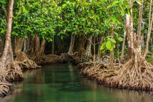 web-72-dpi-shutterstock_185827664_mangrove