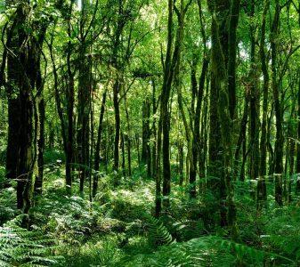 Regenwoud Brazilië
