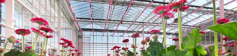 Emission-Free Greenhouse KAS2030