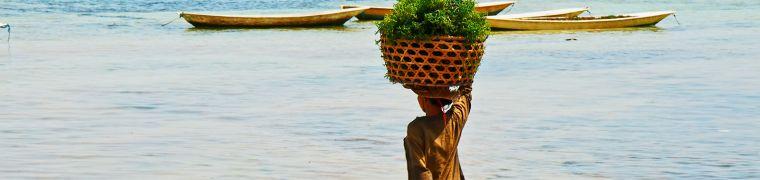 Seaweed as a healthy food source