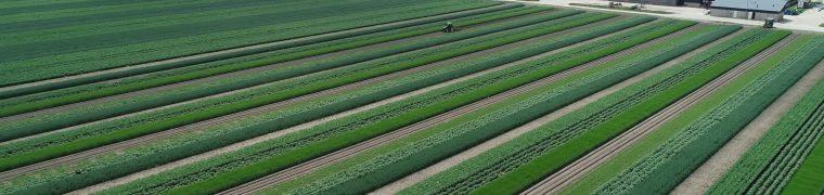 Farm of the Future