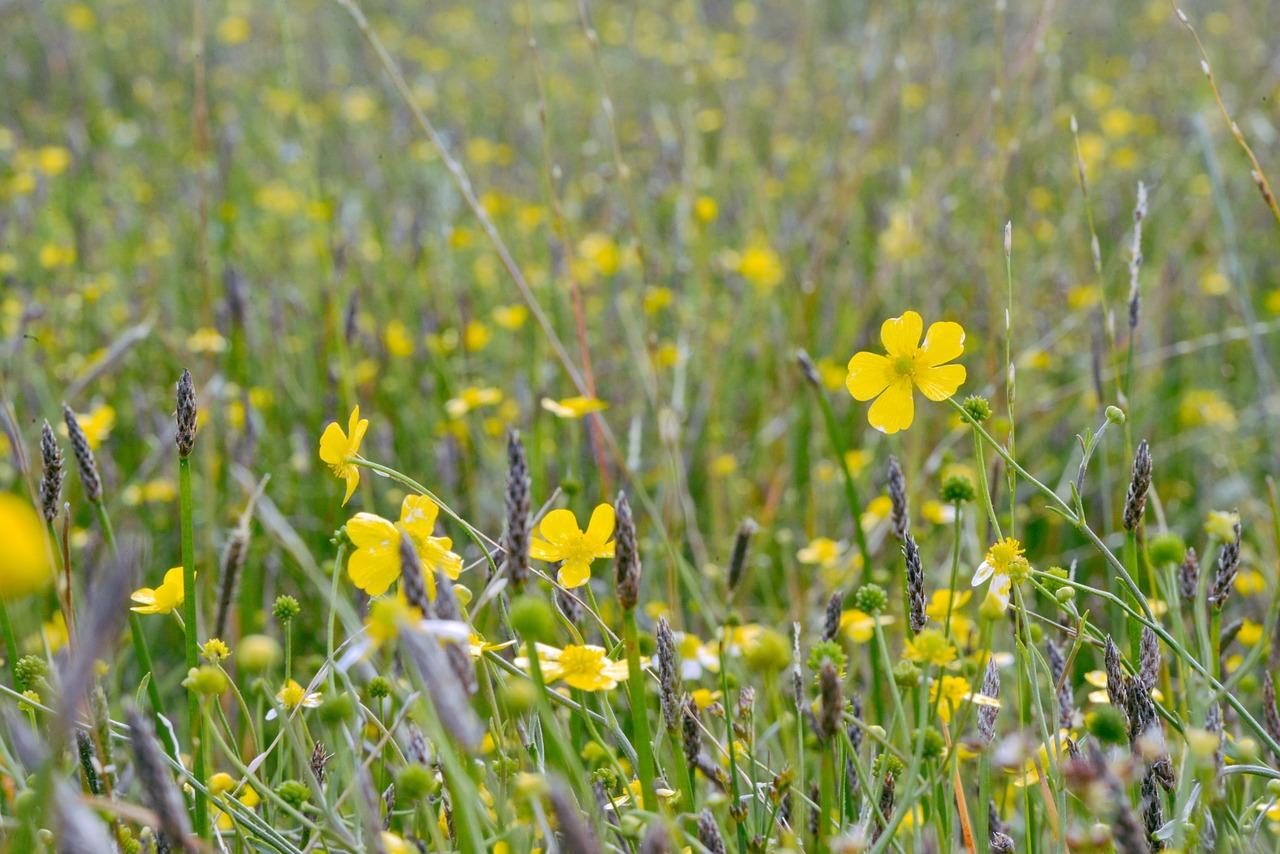 species-rich grasslands help meadow birds to thrive